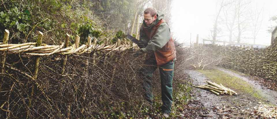 Learn how to lay a hedge using traditional craftsmanship and hedge laying skills.