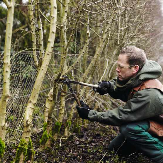Learning how to lay a hedge is easy. This step-by-step guide explains the traditional art of hedge laying