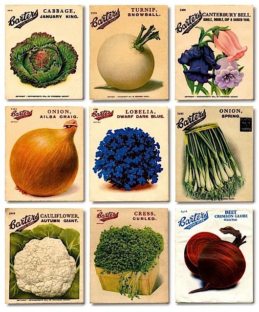 Garden History new new. Credit Garden Museum