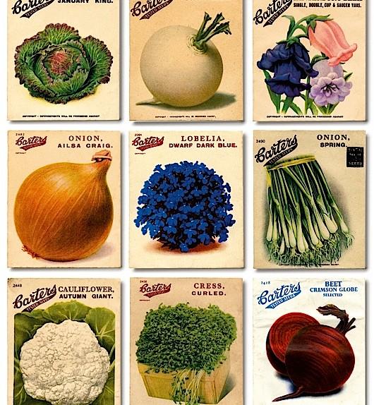 Meet the gardeners - cover