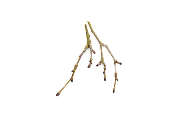 Tree Identification at Westonbirt Arboretum (6th March 2017)