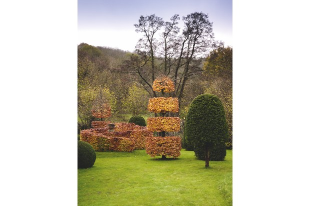 Cut Copper Beech Spiral Hedge with Beech, Yew & Box Topiary