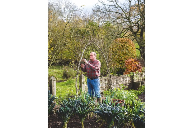 Arne pruning the Pear Arches in The Kitchen Garden