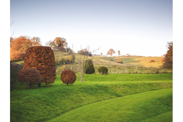 Beech Topiary