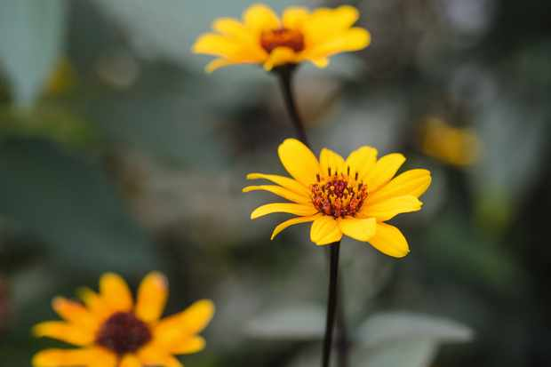 Marina Christopher/Phoenix Perennials Nurseryman's Choice - September (23rd September 2015)