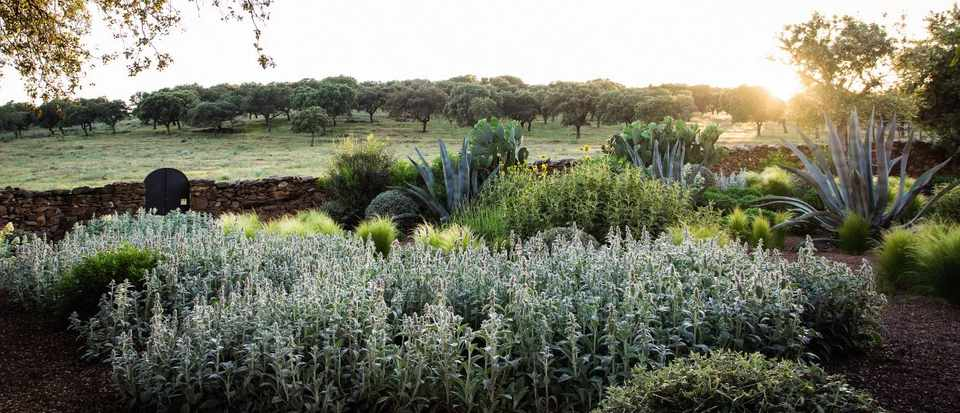 Tips For Planting In A Dry Climate Gardens Illustrated