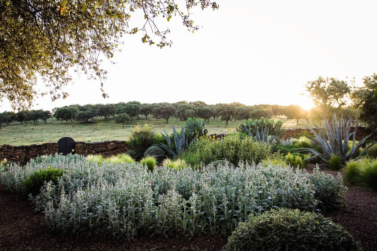 Agave and other dry-climate plants are highlighted in a Spanish garden by the sunrise