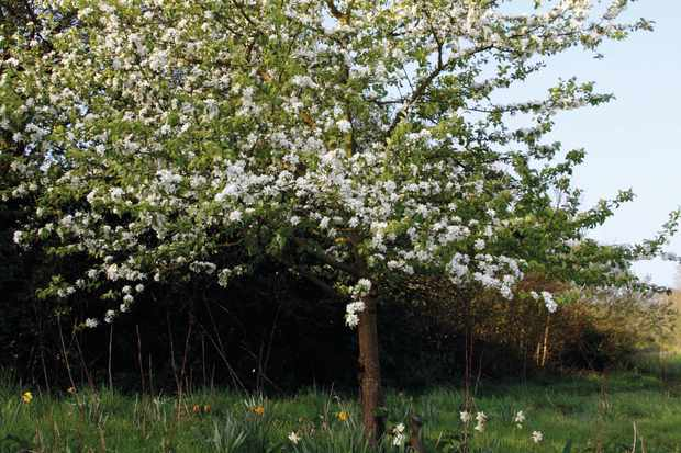 The best crab apple trees for colour and form - Gardens
