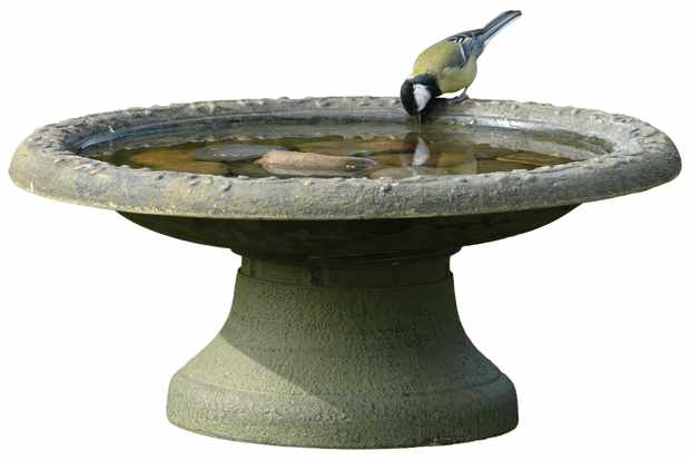 Great tit (Parus major) drinking at RSPB clay bird bath.