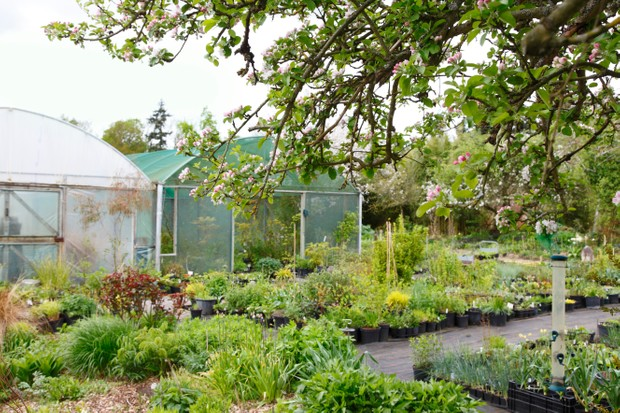 Owned by avid plant collector Paul Barney, Edulis Nursery specialises in rare and edible plants.