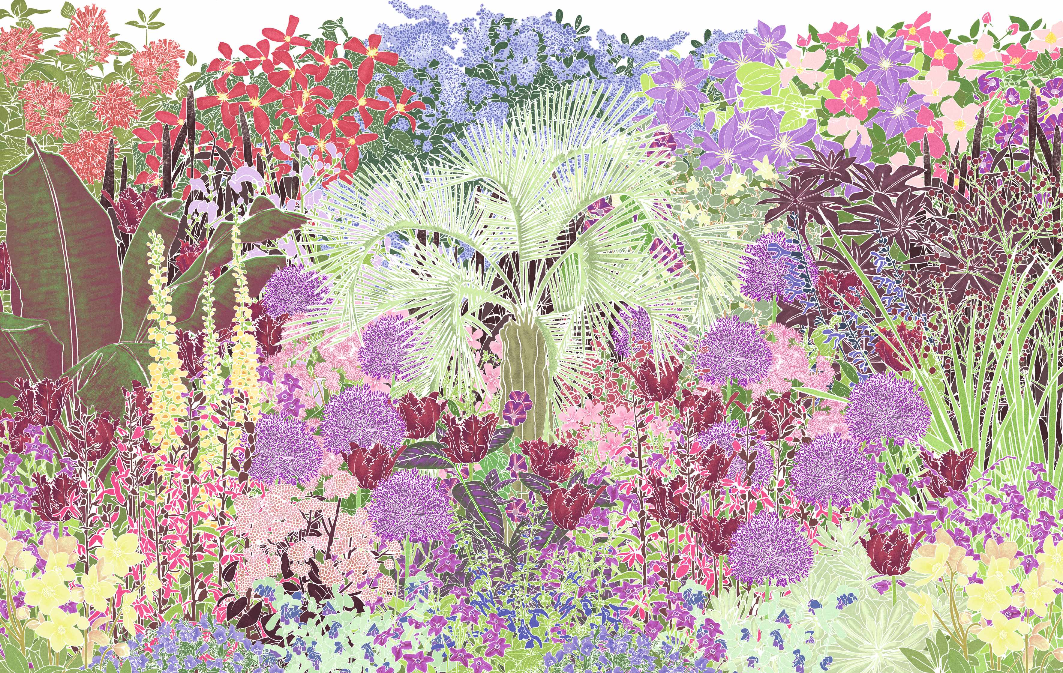 Exotic border plan for the garden