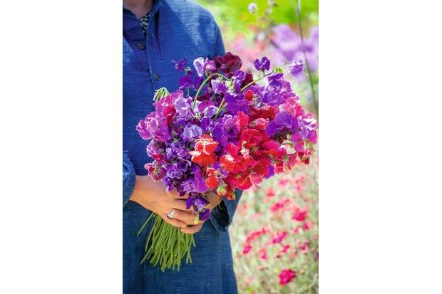 Sarah Raven's New Giants Sweet Pea Collection