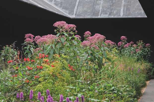 This planting by Piet Oudolf at the 2011 Serpentine Pavilion designed by Peter Zumthor showcases balance between distilled, angular, built forms and beautifully put together. chaotic and colourful nature.