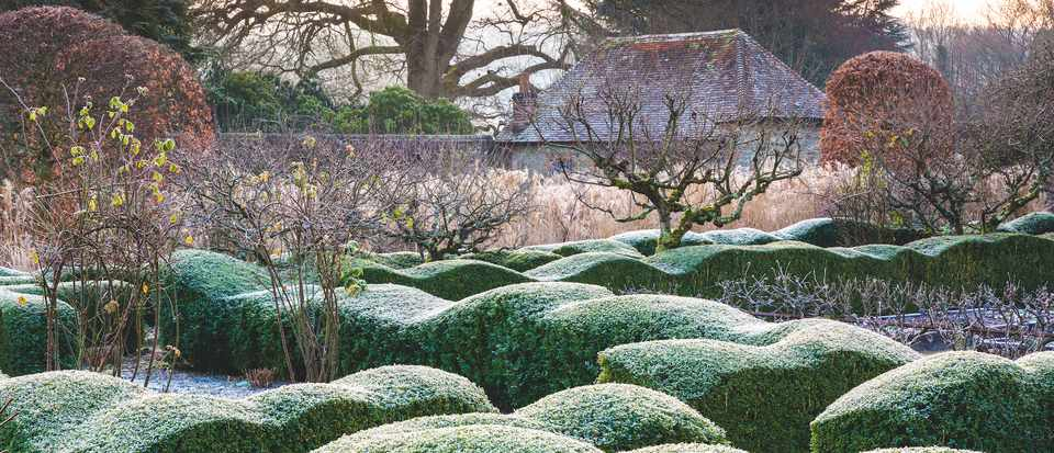 View from within the walled garden across Buxus sempervivens wave hedge with frost. Designed by Arne Maynard. c Richard Bloom
