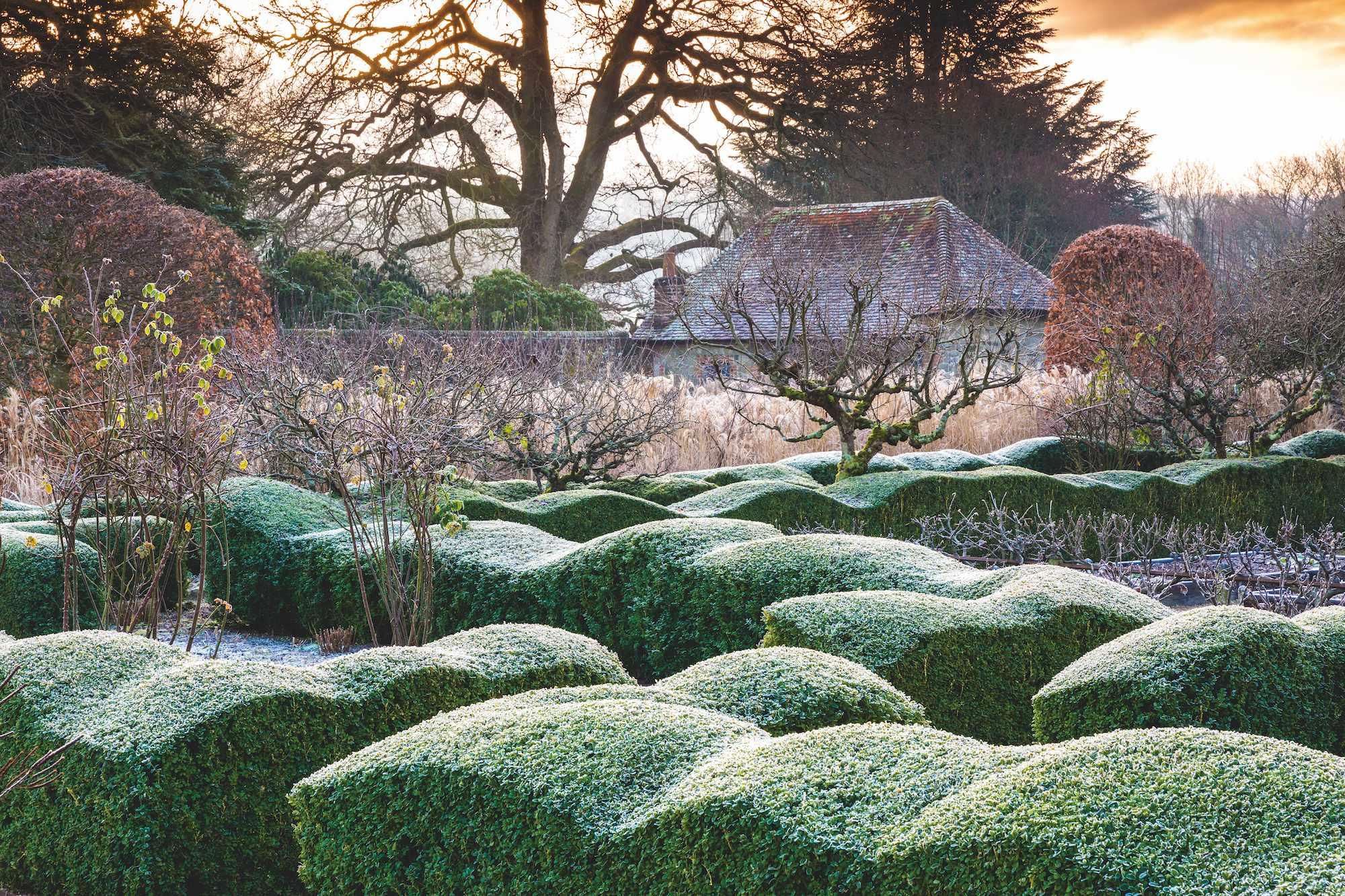 View from within the walled garden across Buxus sempervivens wave hedge with frost. Designed by Arne Maynard.