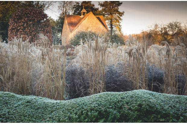Ornamental grasses. c. Richard Bloom
