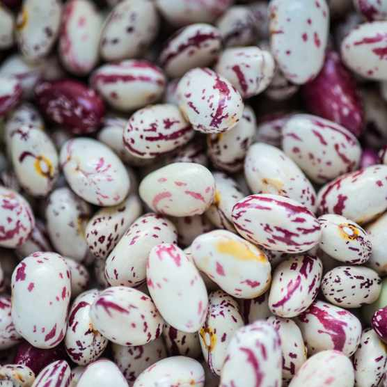 Borlotti beans. Photo: Getty Images