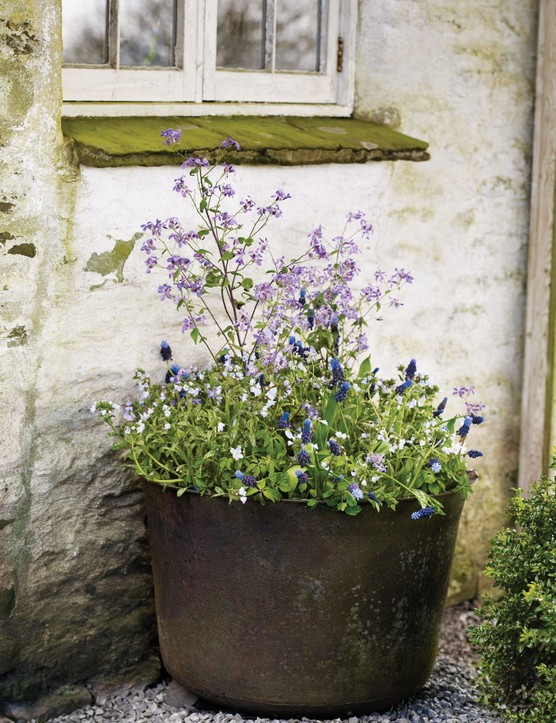 Kristy Ramage's choice for a Spring wild-like pot