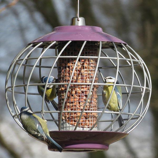 Birds hanging from a garden bird feeder with anti squirrel cage