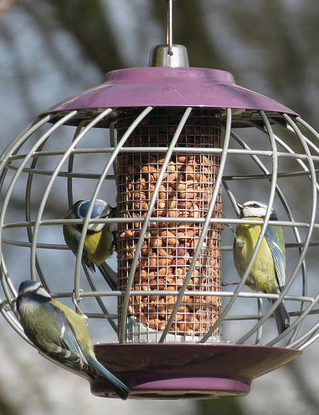 Birds hanging from a garden bird feeder with anti squirrel cage