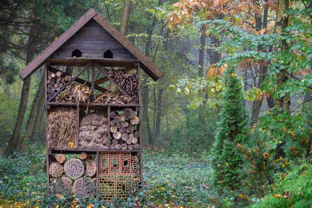 Shelter for wild insects in forest reserve