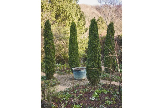 A copper planter is positioned in the middle of four tall, slender trees on top of stable setts