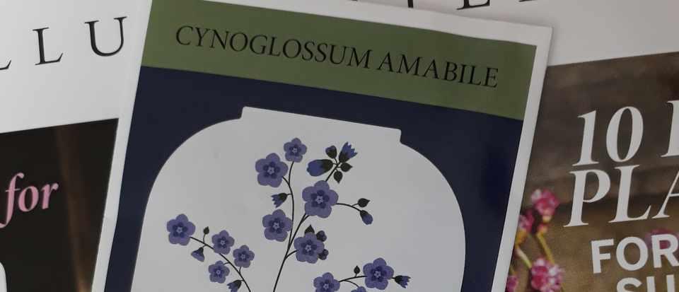 Cynoglossum seeds