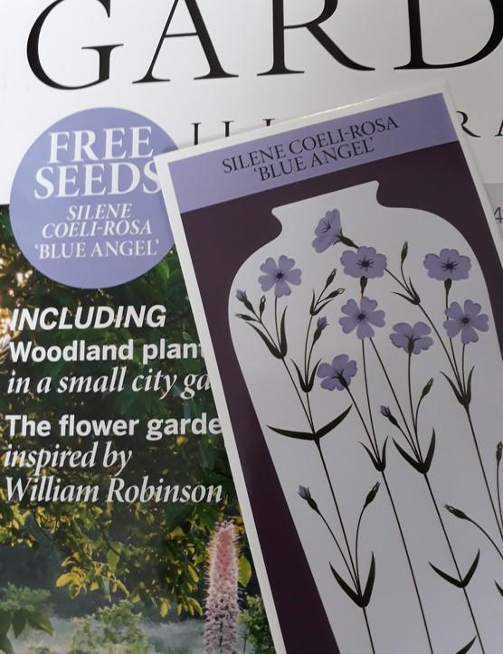 Silene seeds