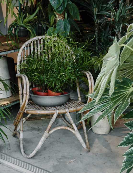Garden Museum's Houseplant Festival