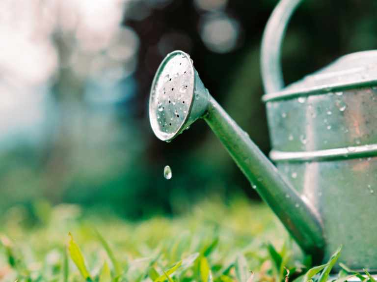 When to water plants in hot weather
