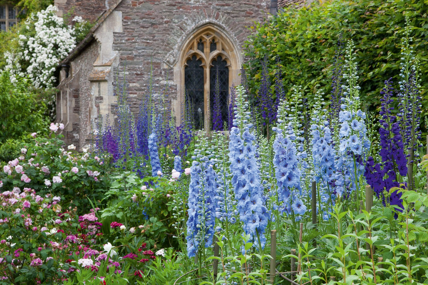 The delphinium border at Hanham Court