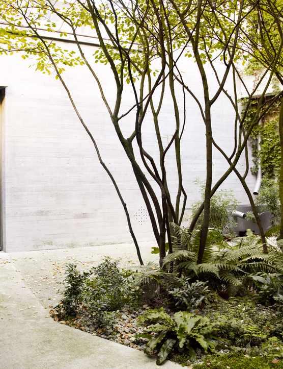 Juergen Teller's studio garden