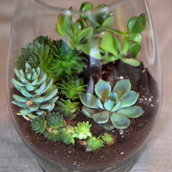 A terrarium