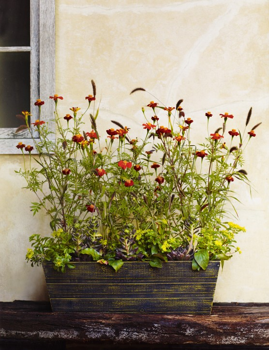 A late summer container
