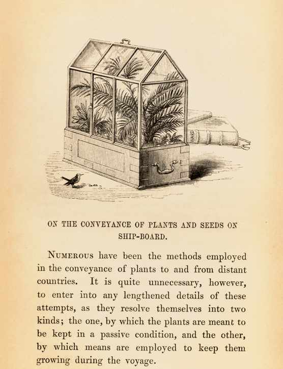 Page from N. B Ward's publication 'On the growth of plants in closely glazed cases', 1852 edition. The illustration depicts a 'Wardian Case' which was developed by Ward, a Physician with an interest in Botany, to protect his fern specimens from air pollution in London. It was later used as a method of safely transporting plant specimens from plant hunting expeditions back to Britain following successful tests by Ward in 1833 on a ship travelling from England to Australia.
