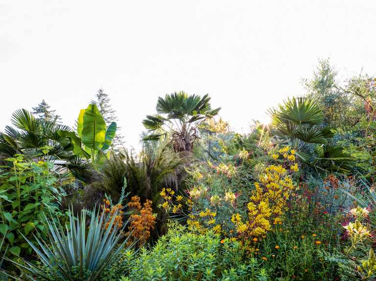 Tropical planting in a garden on the US West Coast