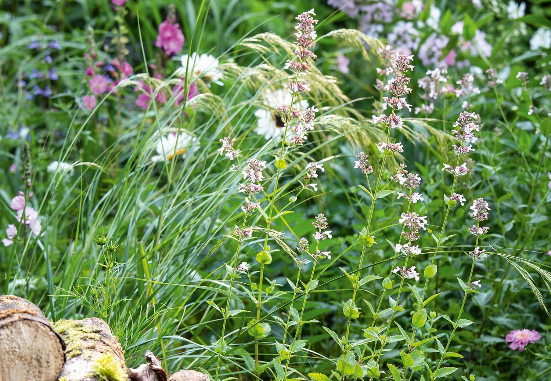 Nigel Dunnett's own garden
