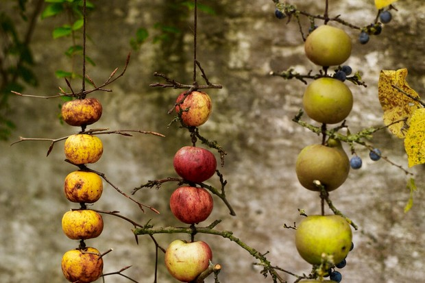 Apple bird feeders