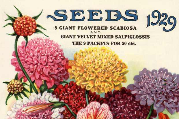 Variety of flowers seed packet