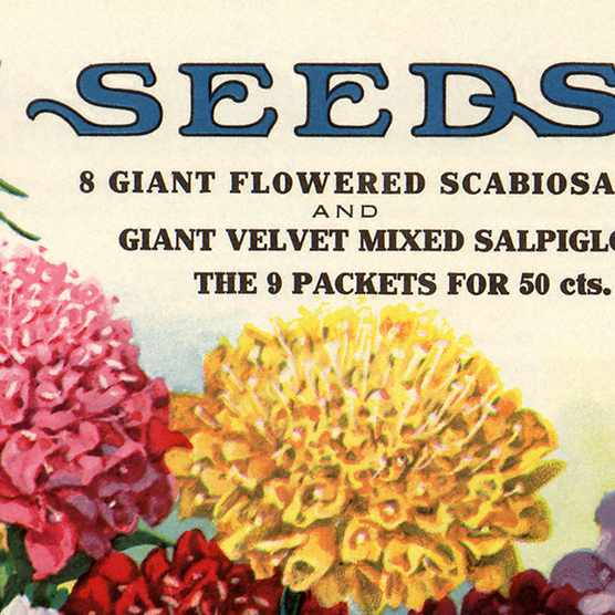Seed suppliers: where to buy seeds