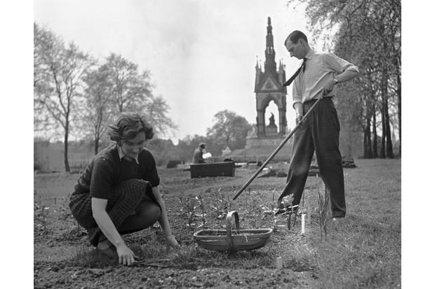 Tending allotments, Hyde Park, London, Second World War, 18 May 1941.