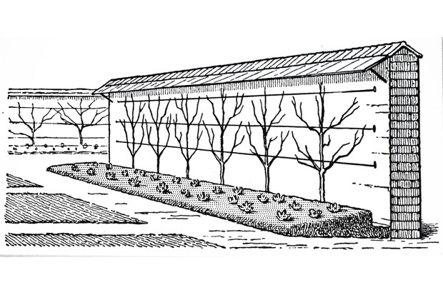 An engraving depicting espaliered fruit trees in a kitchen garden. Dated 20th century
