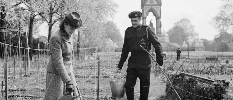 Working on an allotment in Kensington Gardens, London, 1942