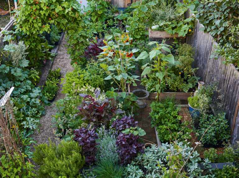 Growing an edible garden: what to plant