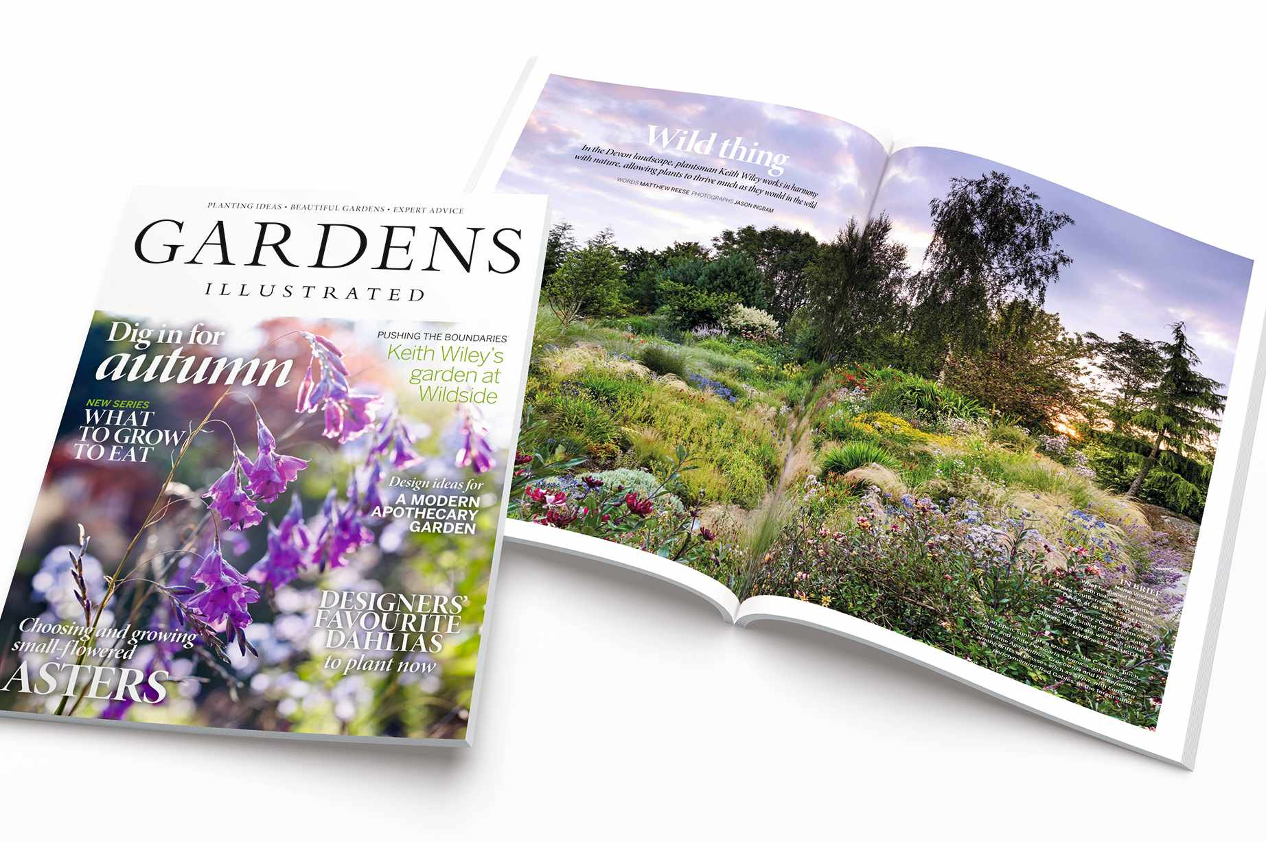 October Gardens Illustrated