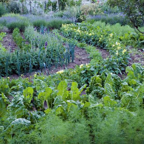 Vegetables grown in swirls