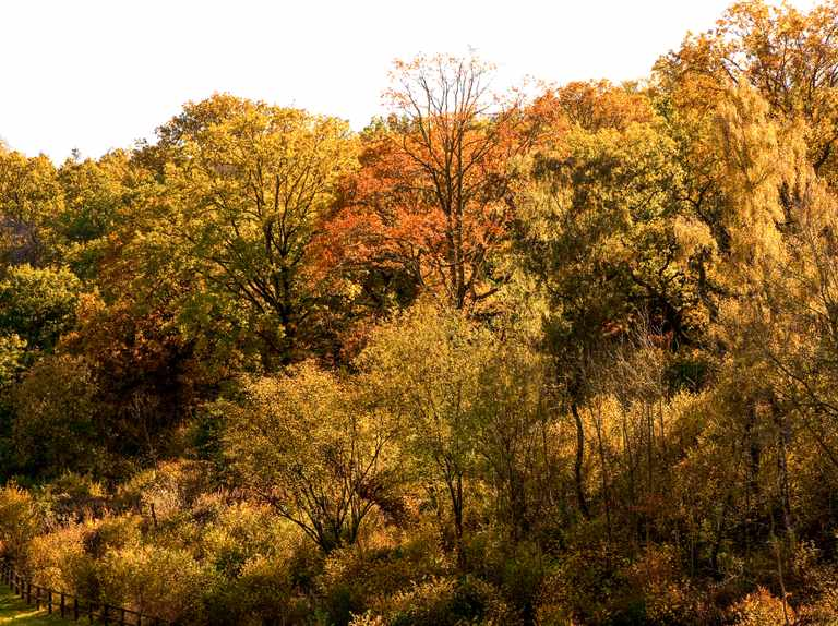 Project to save trees and woodland from ash dieback launched
