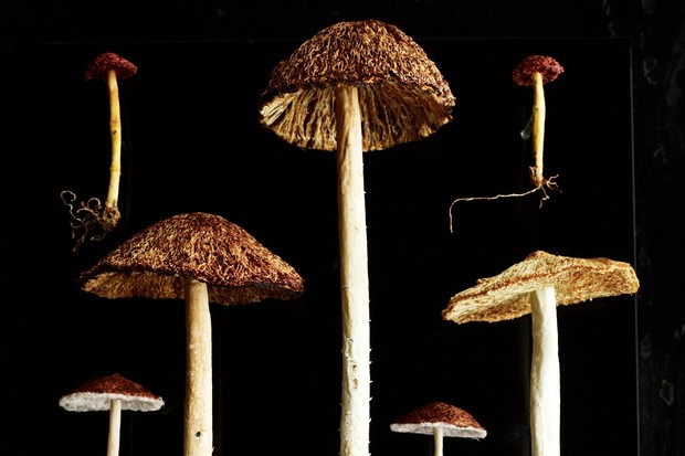 Amanda Cobbett's embroidered fungi