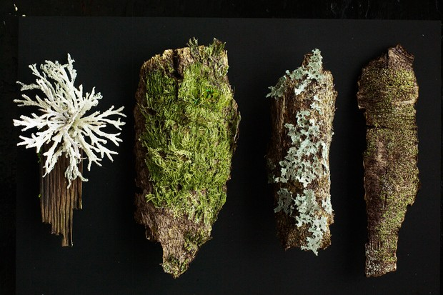Amanda also enjoys making pieces based on the bark, moss and lichen she finds in the forest. Here we see, from left, lichen Pseudevernia furfuracea, creeping feather-moss (Amblystegium serpens) and lichen Hypogymnia physodes.