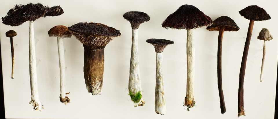 Amanda Cobbett's mushroom artworks